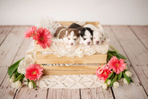 puppies-061