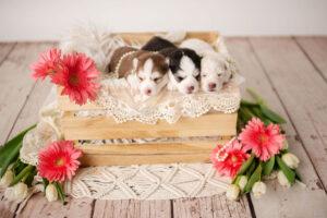 puppies-062