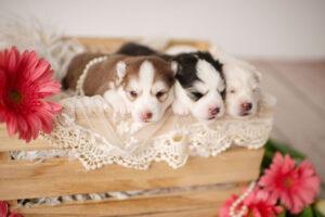 puppies-063
