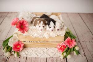 puppies-064