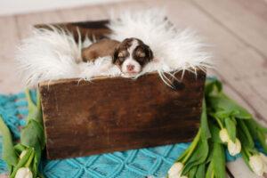puppies-091