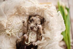 puppies-092