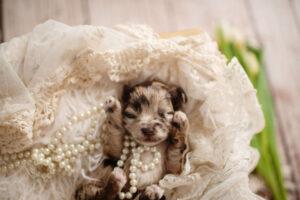 puppies-096
