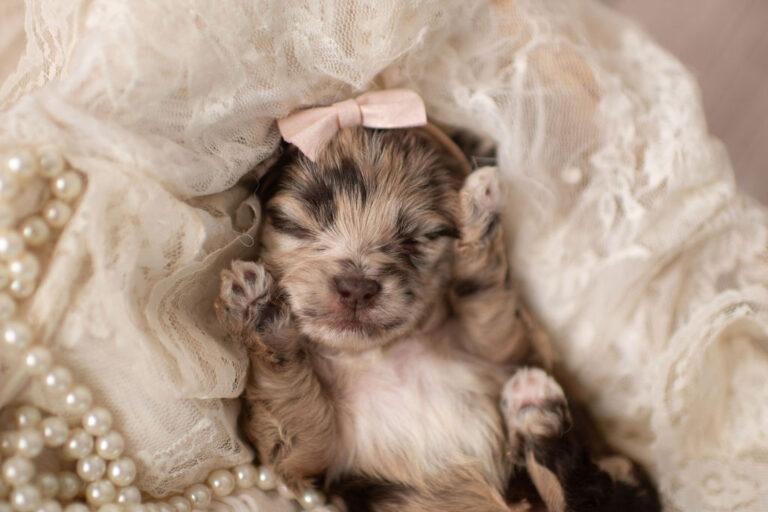 puppies-097