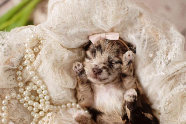 puppies-099