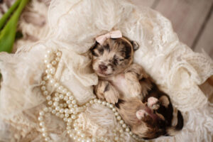 puppies-100
