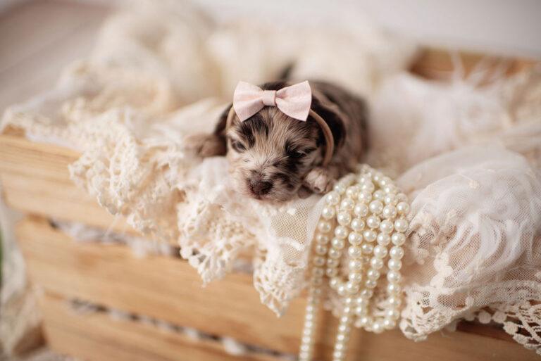 puppies-110