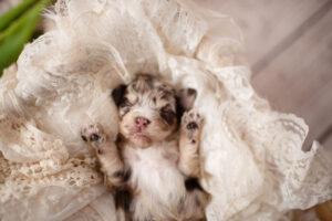 puppies-113