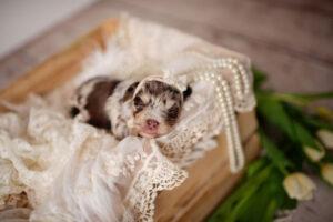 puppies-118