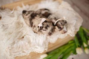 puppies-121
