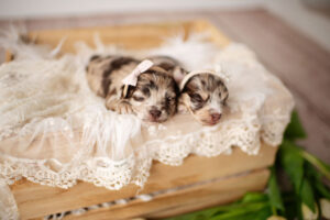 puppies-125