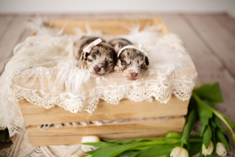 puppies-126