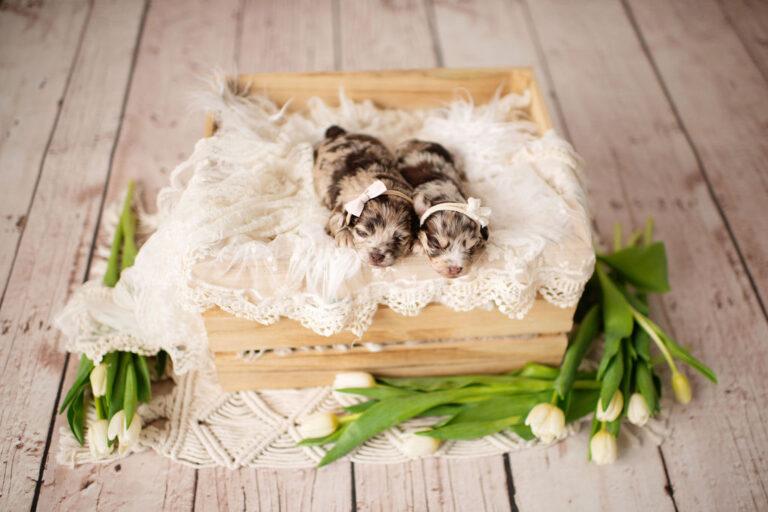 puppies-127