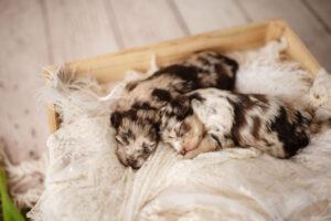 puppies-129