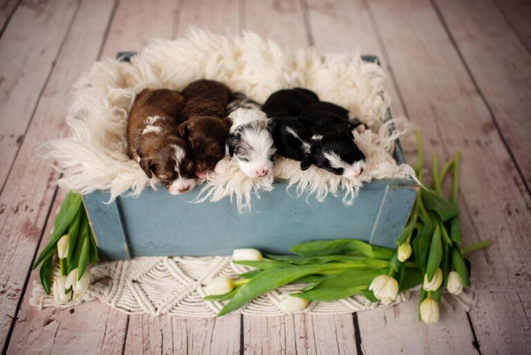 puppies-135