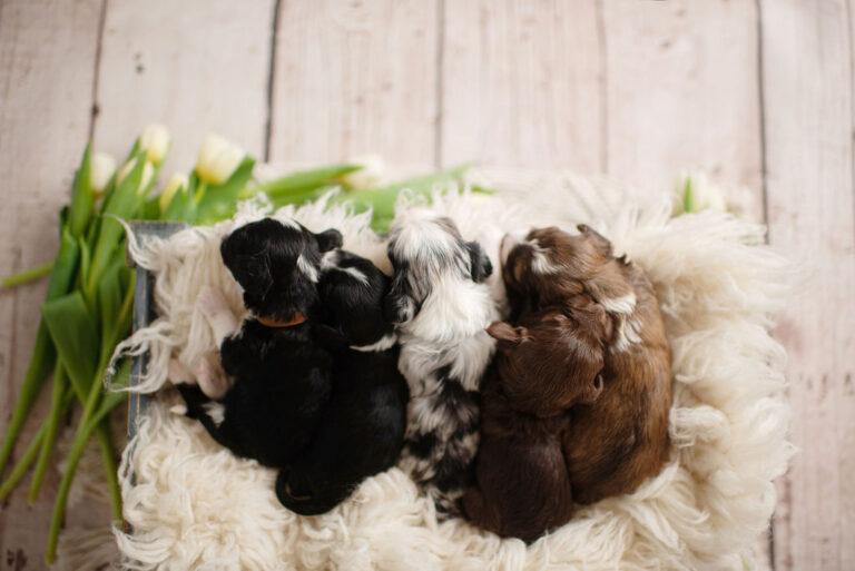 puppies-136