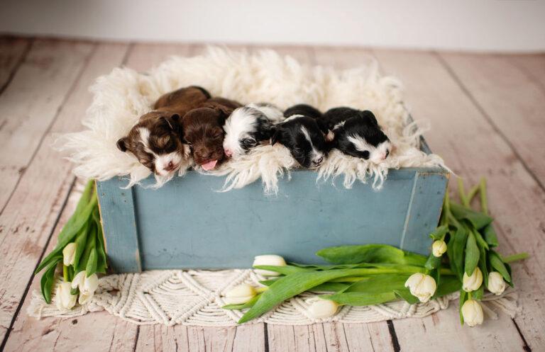 puppies-138
