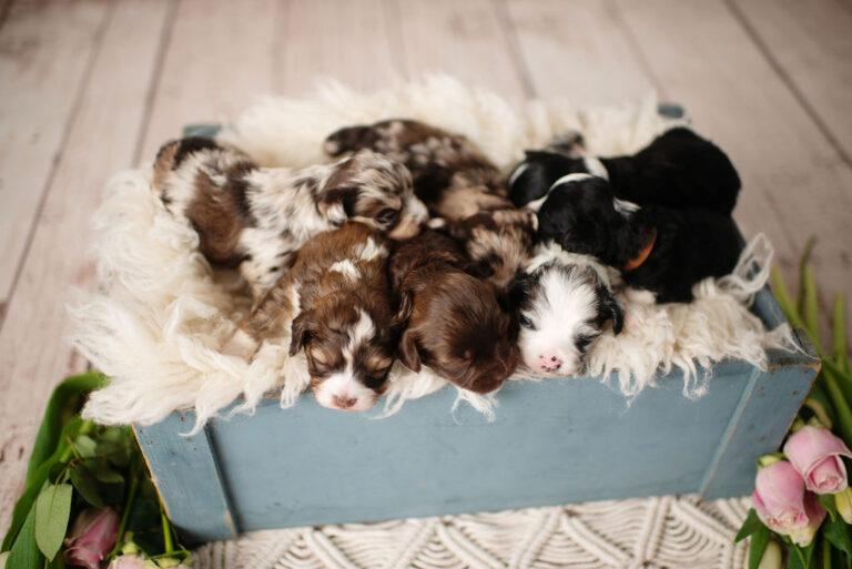 puppies-143