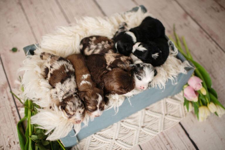 puppies-151