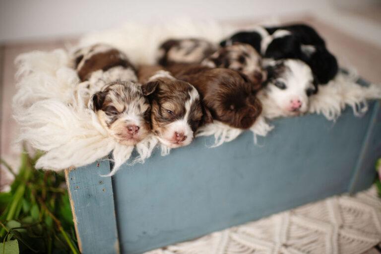 puppies-154