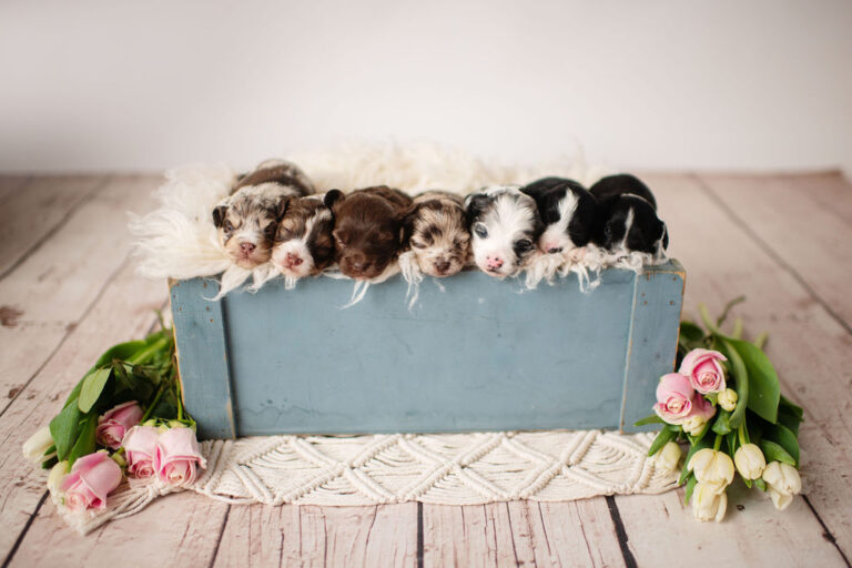 puppies-157