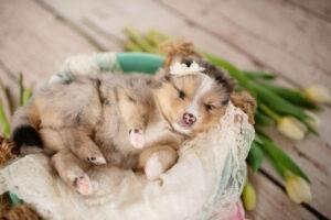 puppies-172