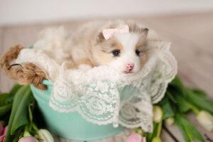 puppies-177