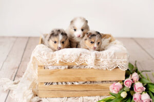 puppies-181