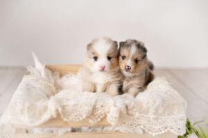puppies-189