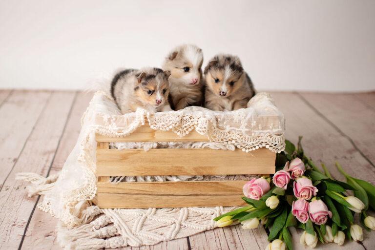 puppies-190