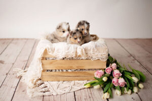 puppies-192