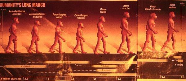Figure 11. Evolution of humans, Time magazine
