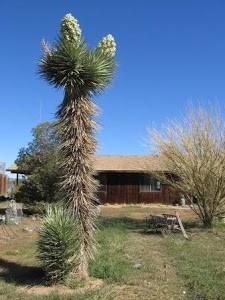 Sentinal Ranch's Landmark