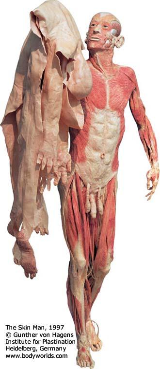 Mchumor7980The Skin Man