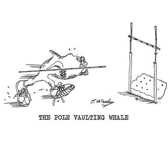 9521 Whale Cartoon
