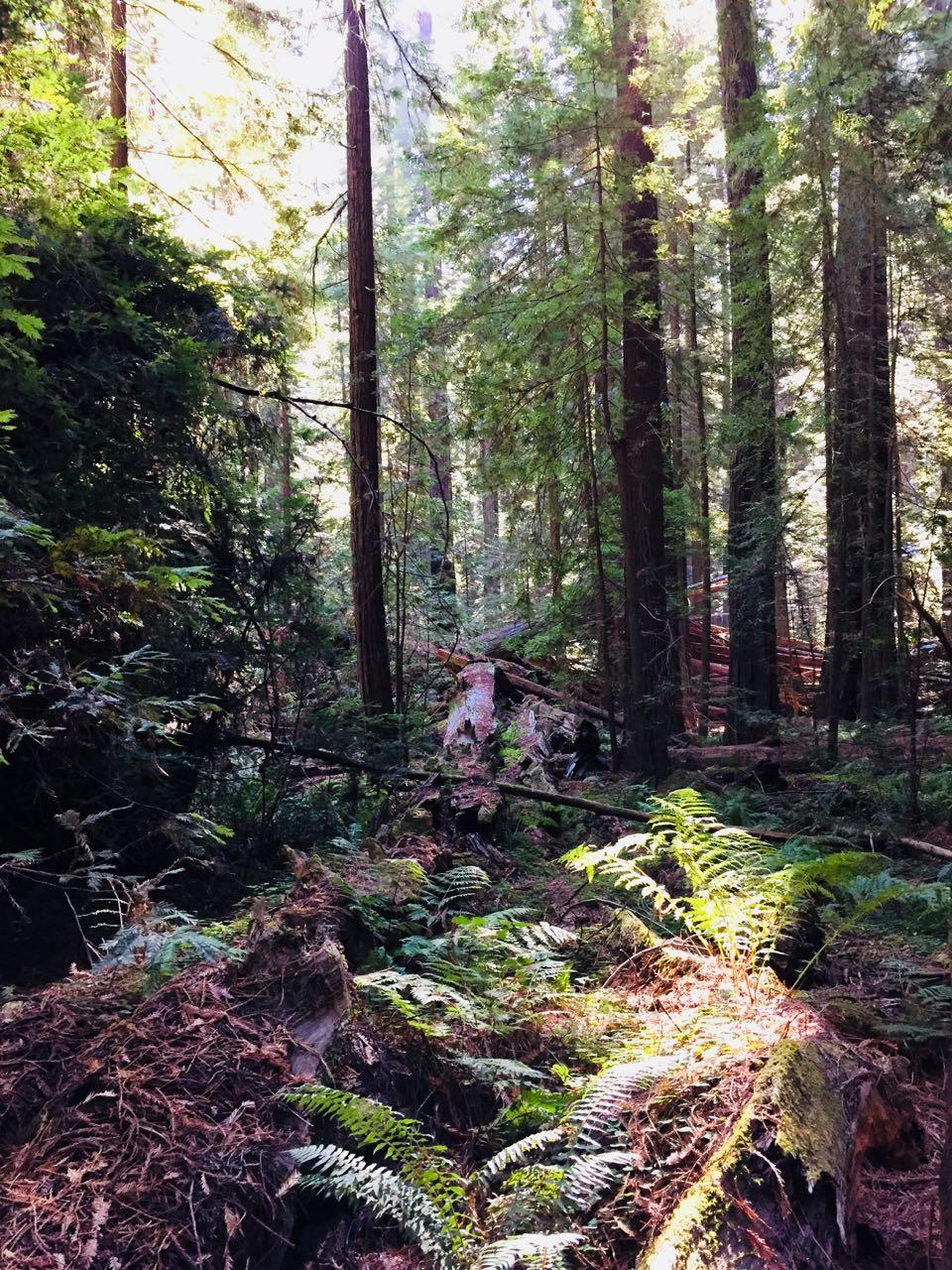 Redwoods 2017 10 01 12 Of 244