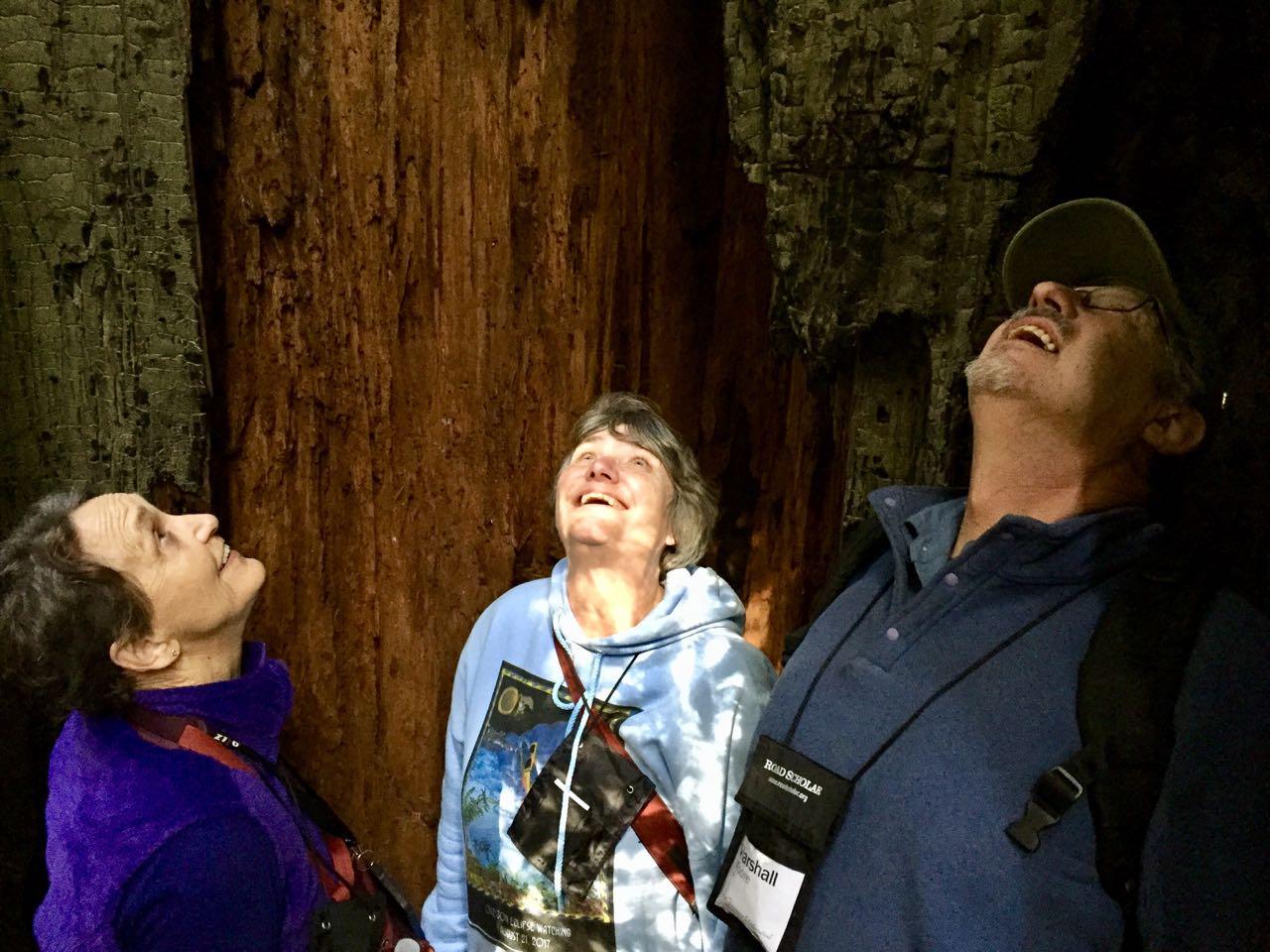 Redwoods 2017 10 01 15 Of 244