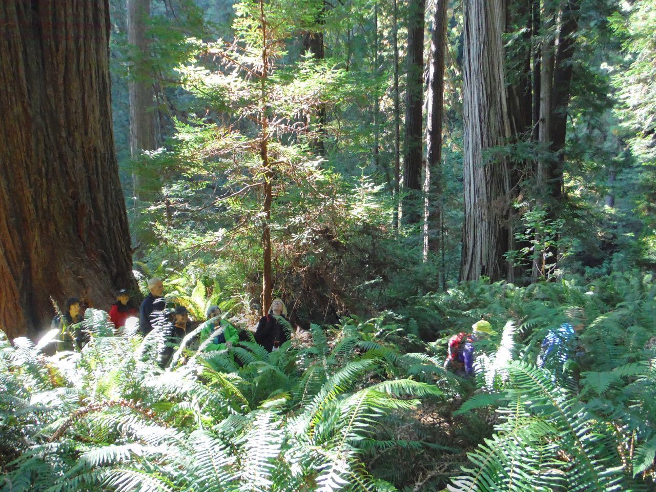Redwoods 2017 10 01 167 Of 244