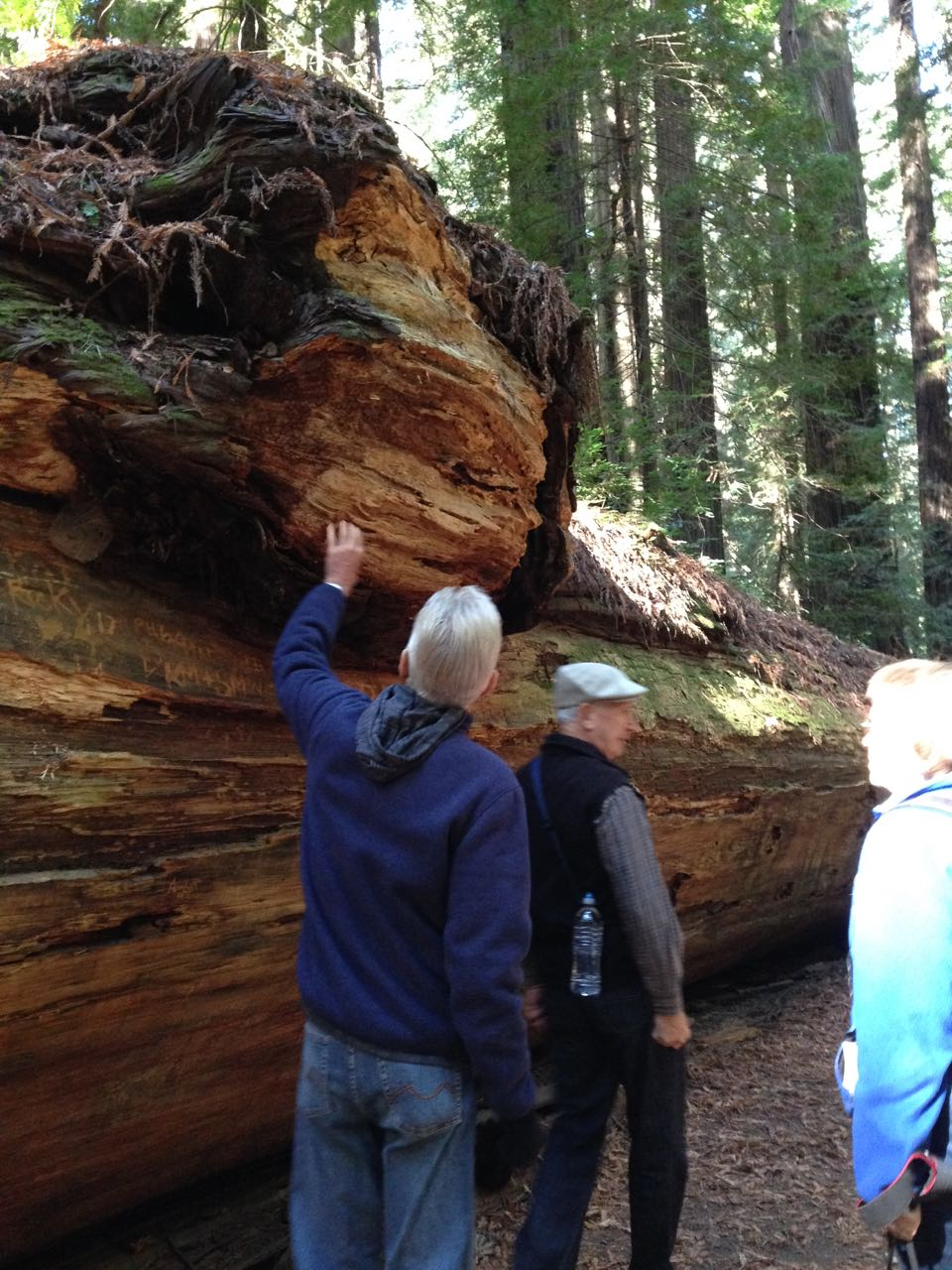 Redwoods 2017 10 01 20 Of 244