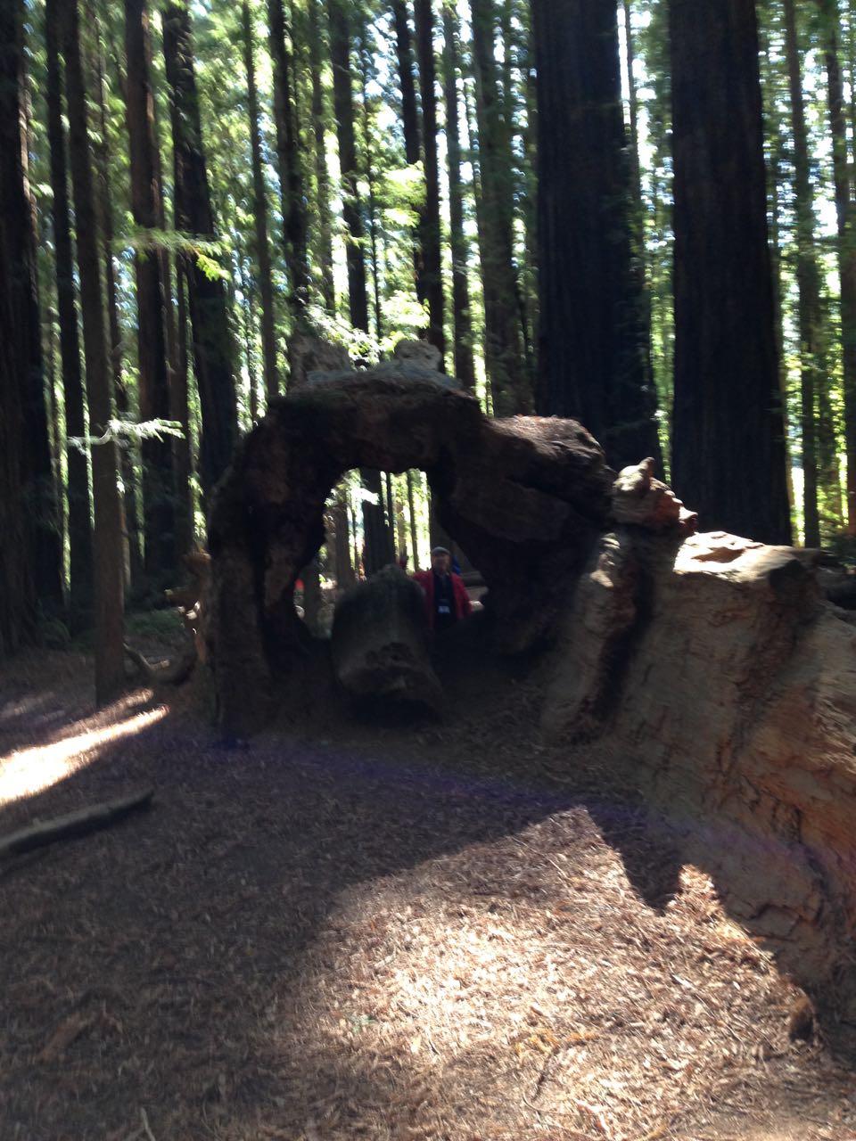 Redwoods 2017 10 01 32 Of 244