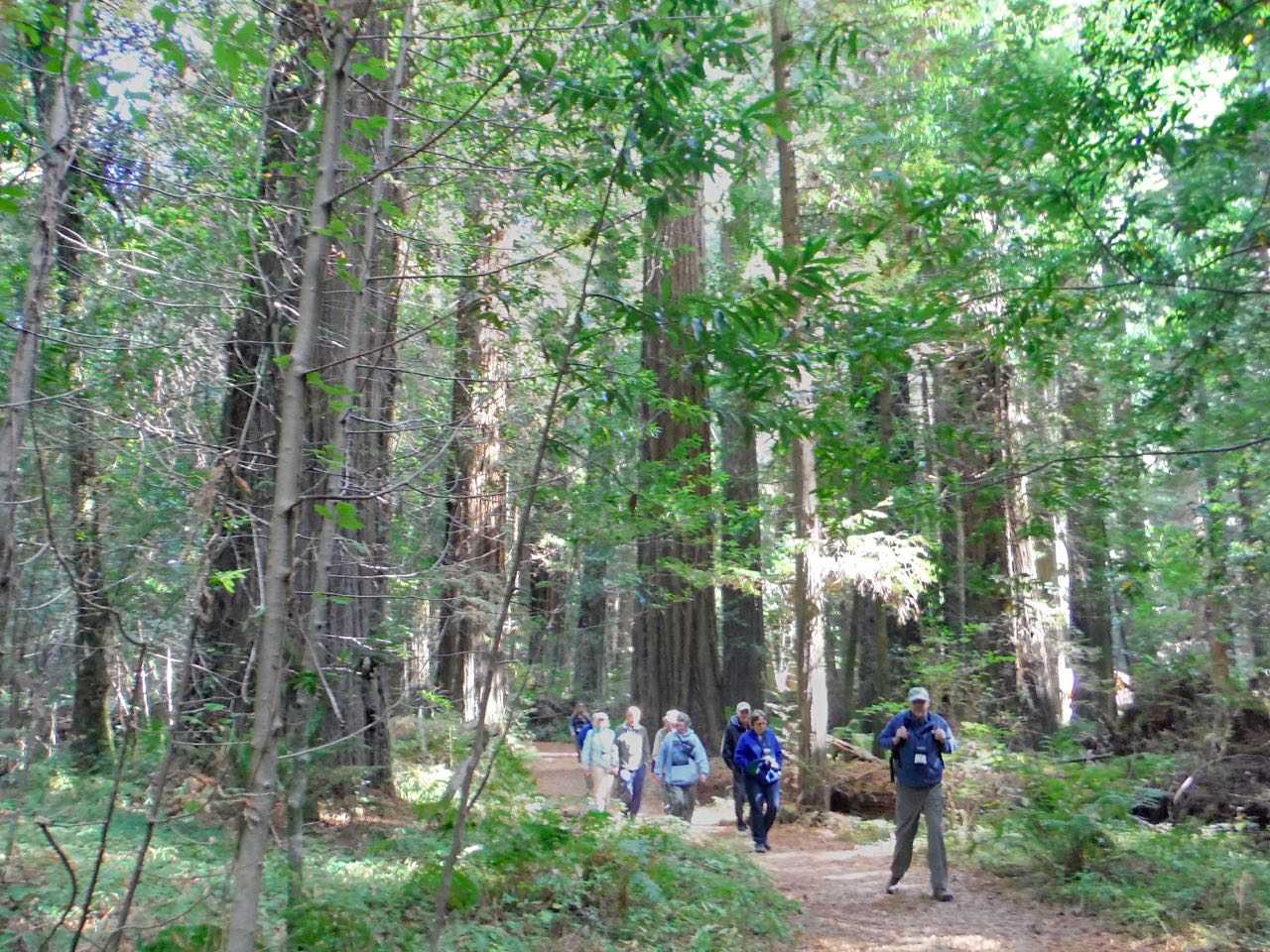 Redwoods 2017 10 01 38 Of 244