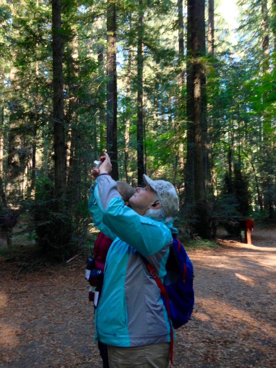 Redwoods 2017 10 01 7 Of 244