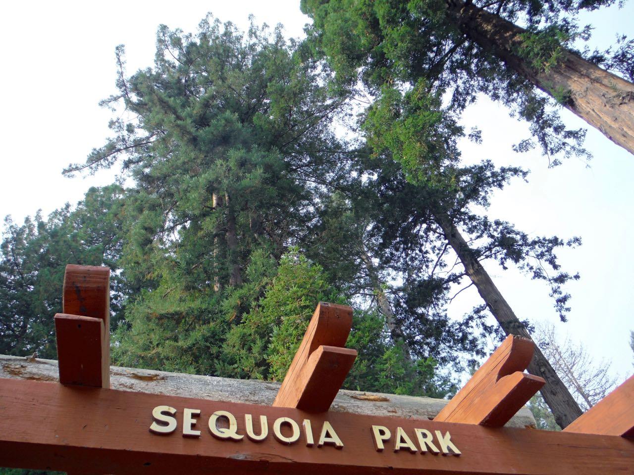 Redwoods 2017 10 08 110 Of 287