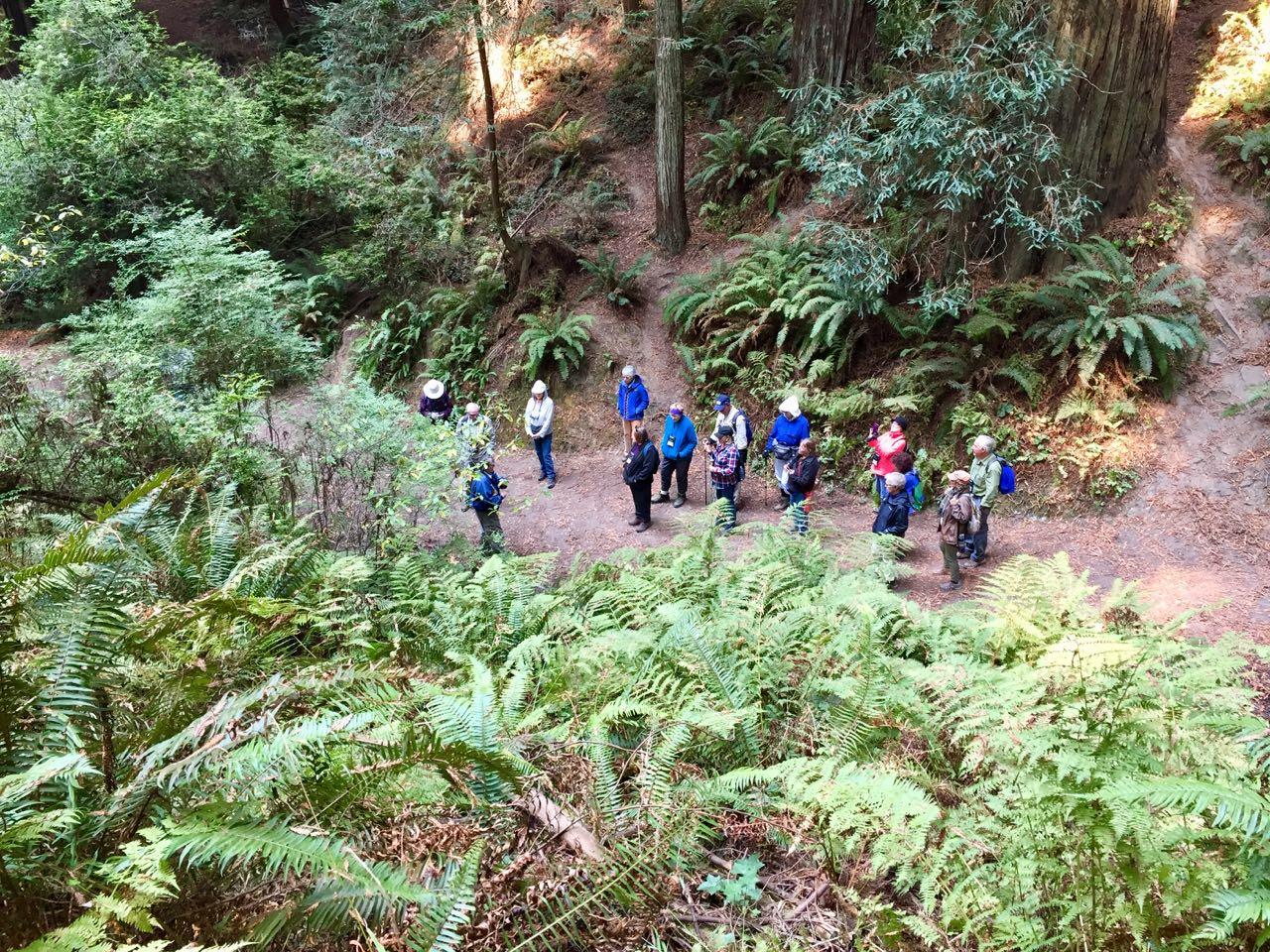 Redwoods 2017 10 08 114 Of 287