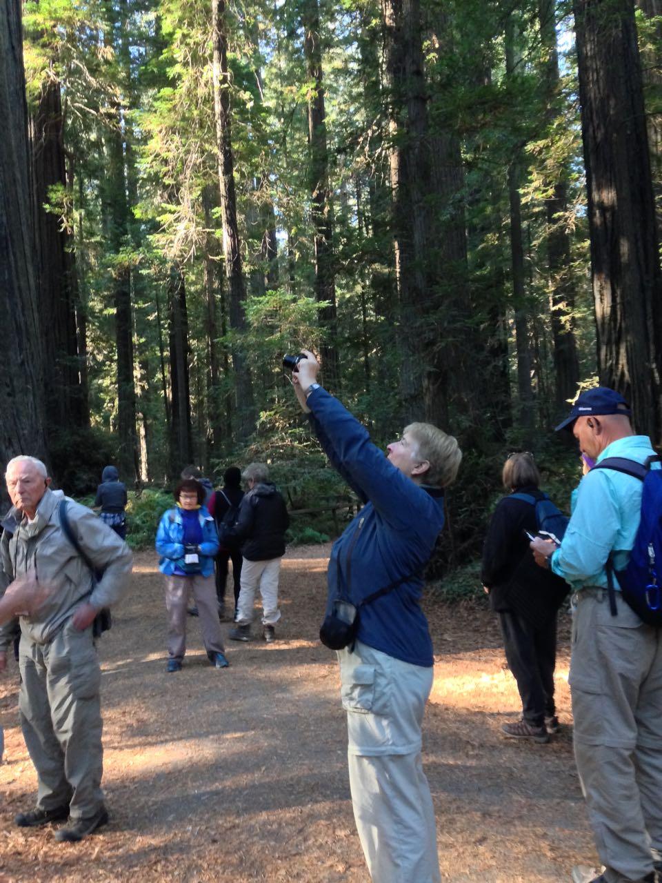 Redwoods 2017 10 08 13 Of 287