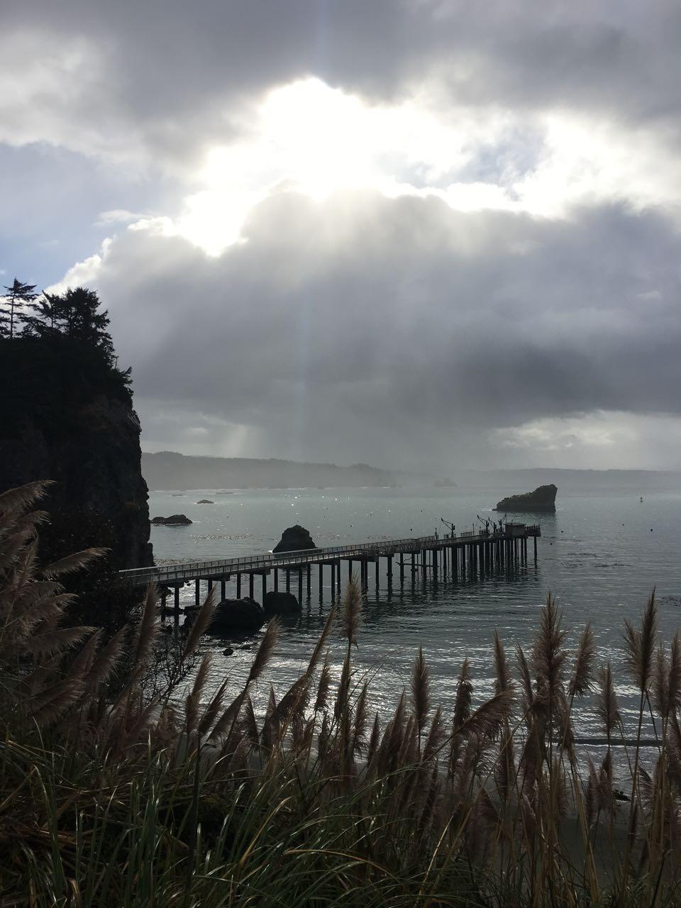 Redwoods 2017 10 08 138 Of 287
