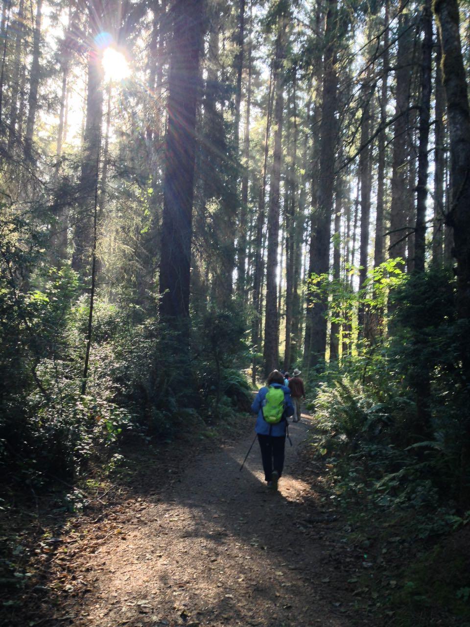Redwoods 2017 10 08 187 Of 287