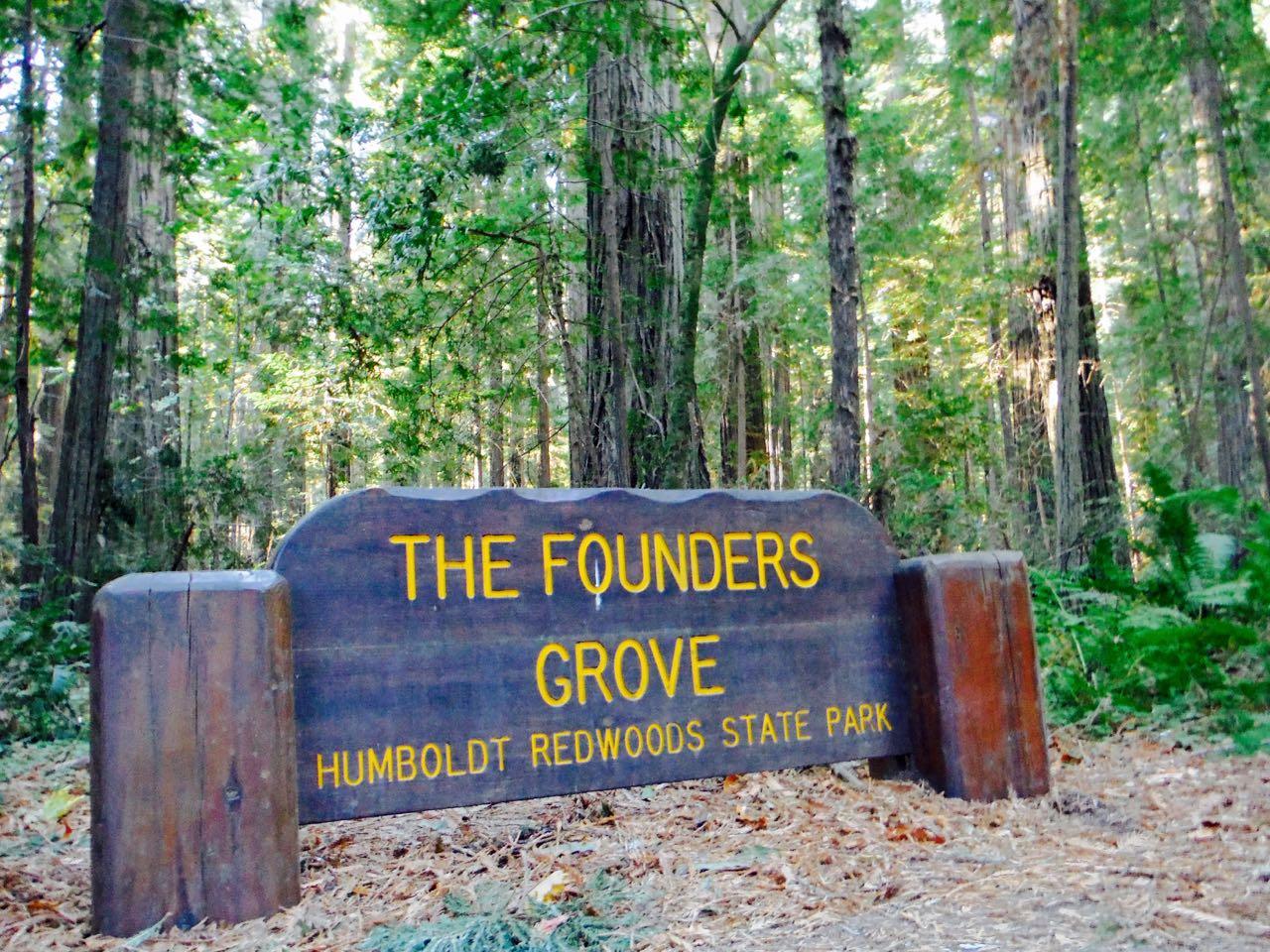Redwoods 2017 10 08 2 Of 287