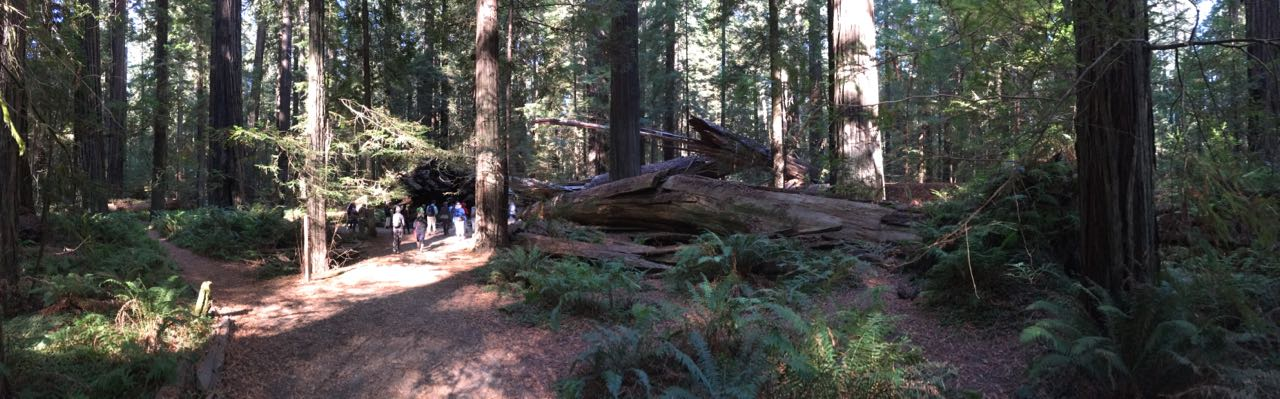 Redwoods 2017 10 08 21 Of 287