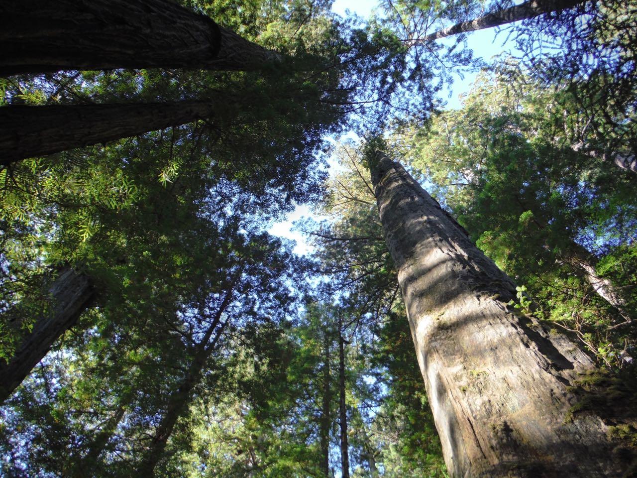 Redwoods 2017 10 08 211 Of 287